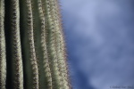 cactus boundaries4.jpg