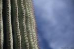 cactus boundaries4.jpg